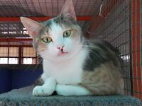 Gumtree Various Adult Cats Need Loving Homes Cute Animal Pictures Cats Cute Animals