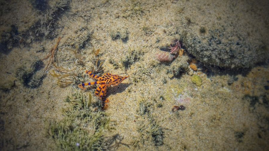 Almost Stepping on a Blue Ringed Octopus in Australia