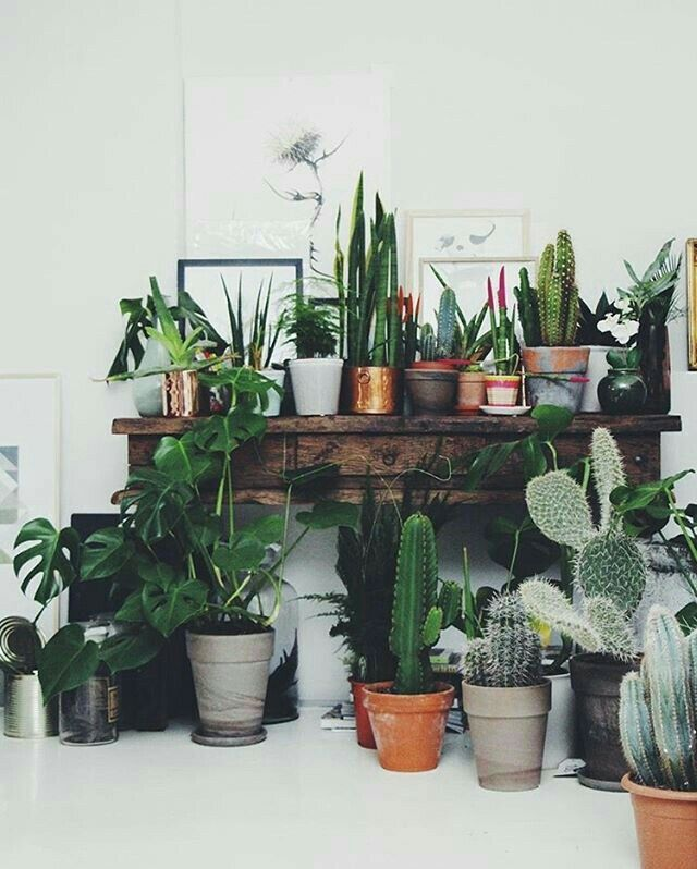 Exceptionnel Weu0027re Loving The Interiors Trend Of House Plants   From Concrete Planters,  Cacti, Basket Pots, Hanging Plants, Palms And So Much Green For Your Home.