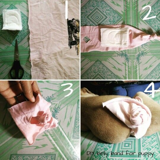 Easy no-sew DIY belly band for puppy  Adjust the knot as you want