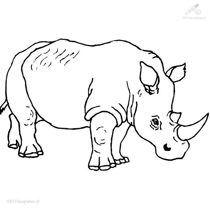 Safari Coloring Page 1001 Coloringpages Animals Rhino