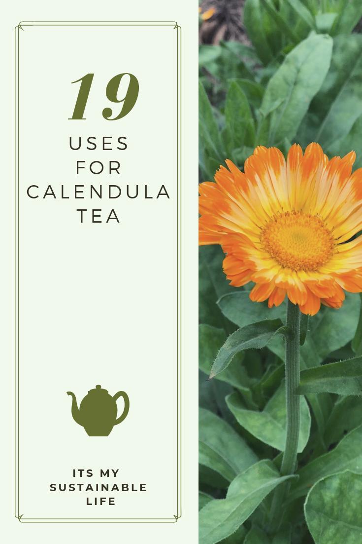 19 Uses For Calendula Tea Calendula tea, Calendula