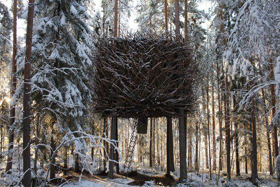 Un hotel dans les arbres | La boite verte