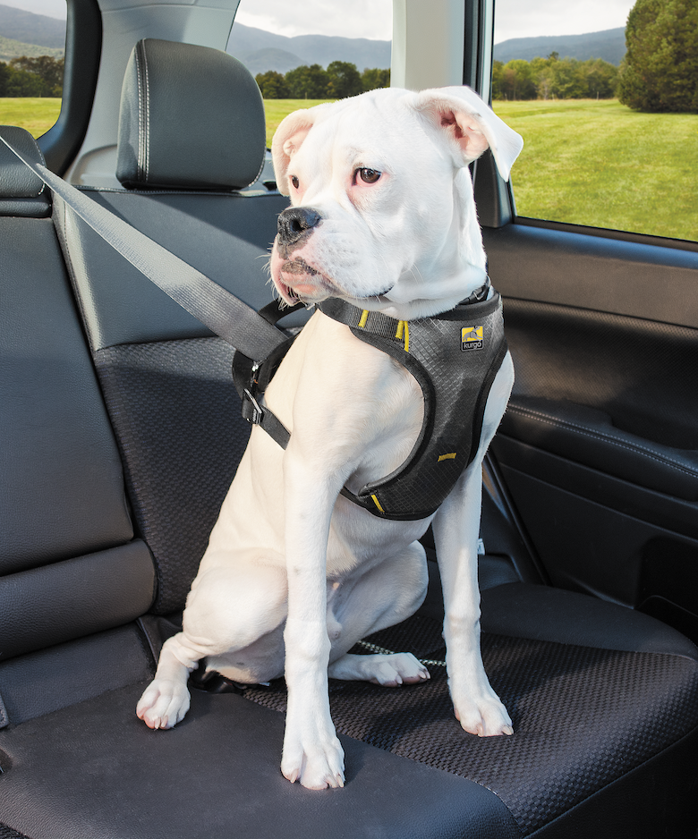 24 MustHave Products for Dogs in 2020 Dog car harness