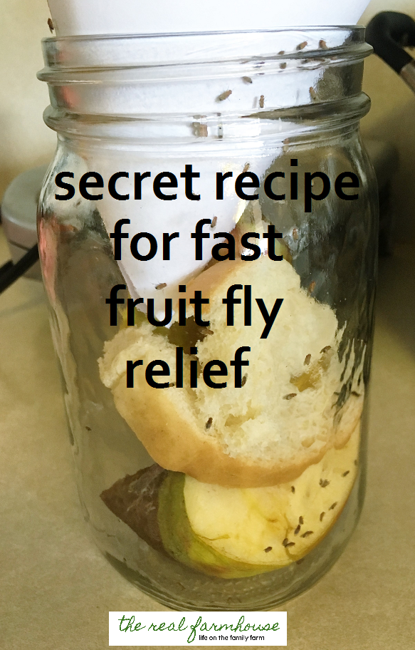 How to get rid of fruit flies naturally- the best way ...