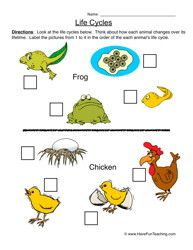 Plant/Animal Life Cycle downloadable worksheets! | Animal Life ...