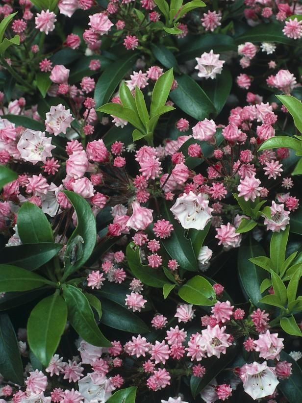 Summer flowering shrubs gardening pinterest flowering shrubs these bold flowering shrubs add a burst of color to your landscape in the summer and fall mightylinksfo