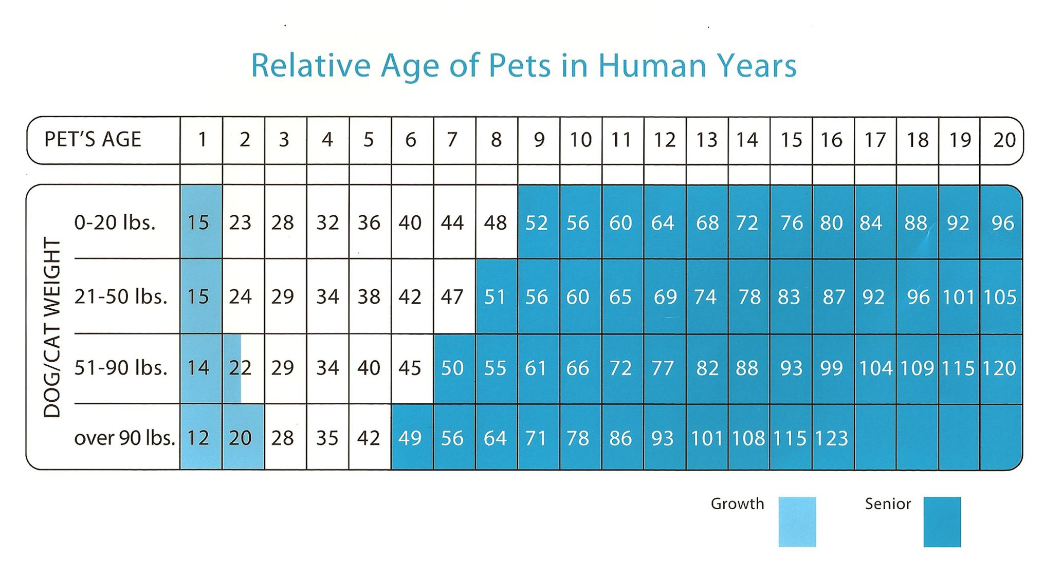 Dog years chart everyone has heard the myth about dog years which dog years chart everyone has heard the myth about dog years which often is described to mean that a dog ages the equivalent of 7 human years for every nvjuhfo Choice Image