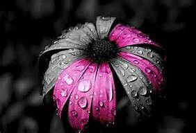 pink petals,,,color splash,,,