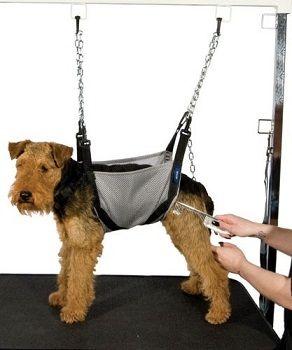 Harness Idea Grooming Shop Dog Grooming Grooming Shop Dog