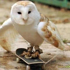 Tiny owl skateboarder will make your day #SmallStuff