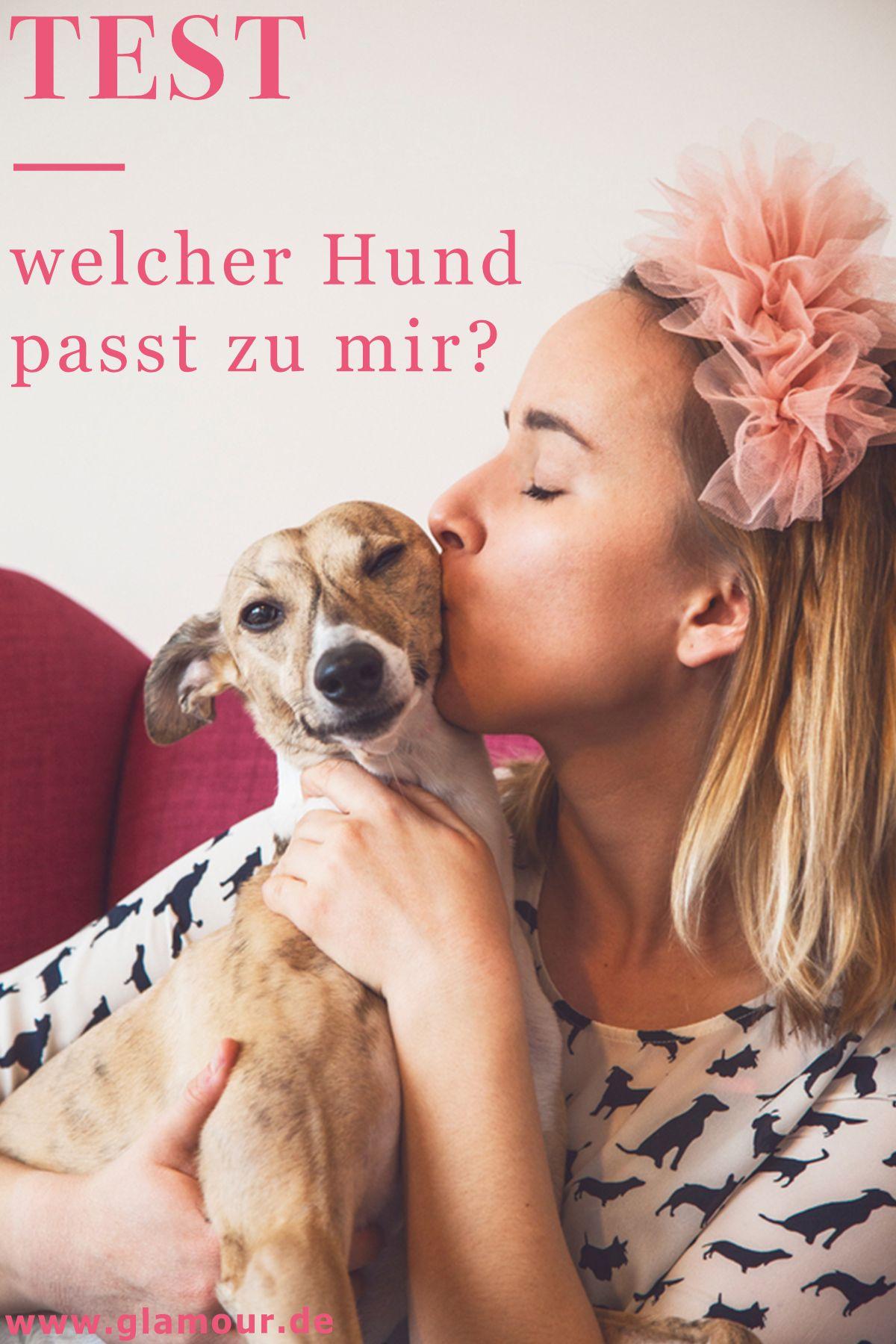 Teste Dich Welcher Hund Passt Zu Mir / Welcher Hund Passt