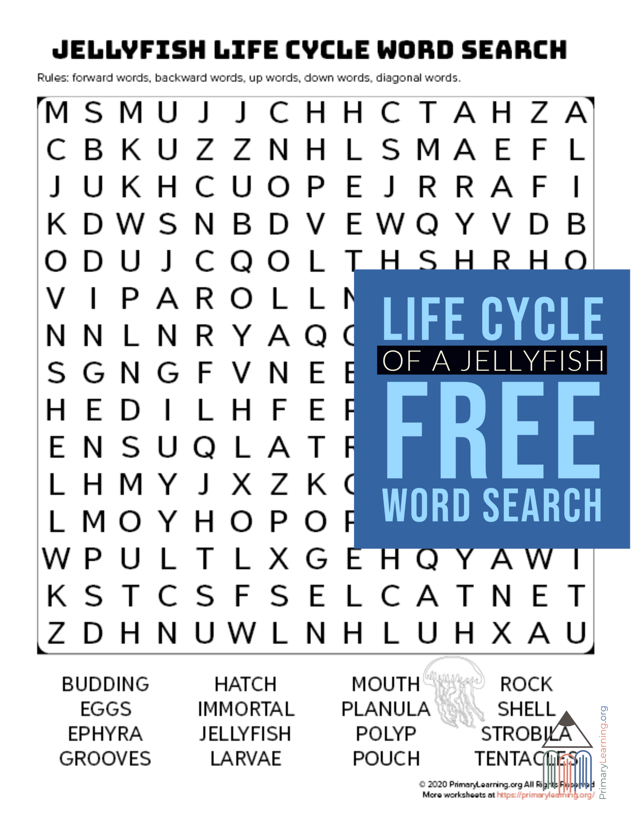 Jellyfish Life Cycle Word Search