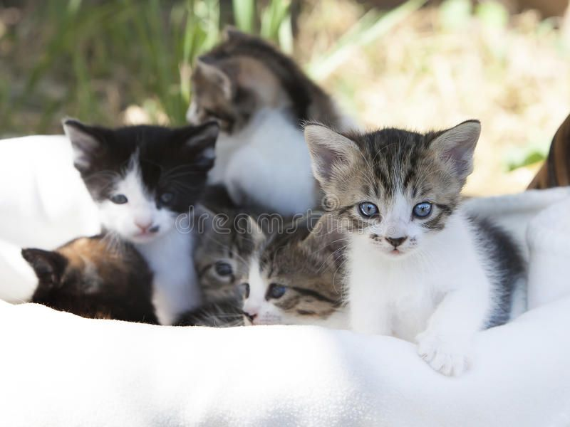 Mixed Breed Kittens Six Mix Breed Kittens In Basket Front Tabby
