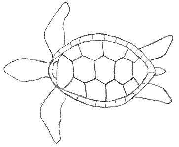 Turtle Drawings Turtle Drawing Turtle Outline Turtle Painting