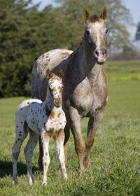 Foaling Checklist
