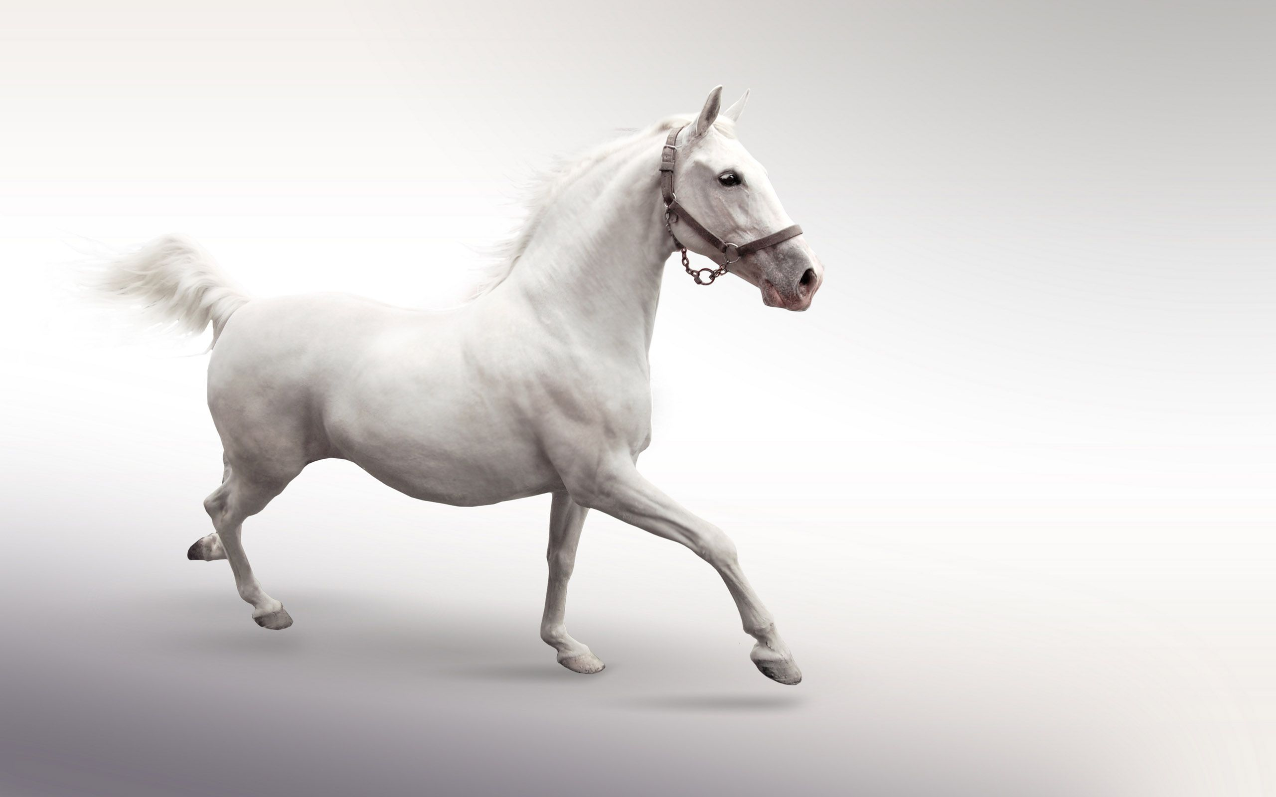 White Horse On A White Background Animal Wallpapers Hd Wallpaper Download For Ipad And Iphone Widescreen 2160p Uhd 4k Hd Horse Wallpaper White Horses Horses