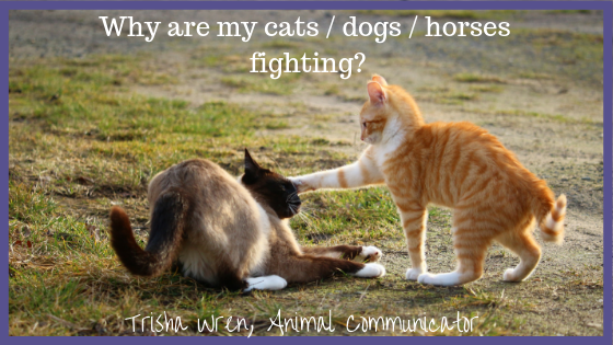 Help, my dogs / cats / horses are not getting along