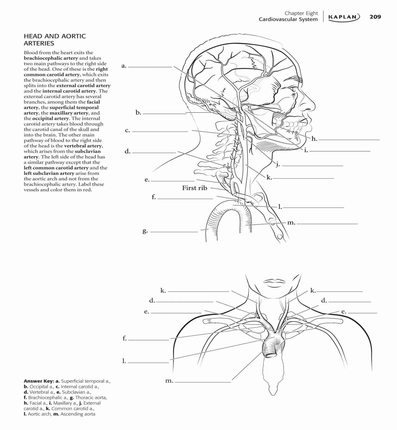 Best Human Anatomy Drawing Book New Best Anatomy Coloring ...