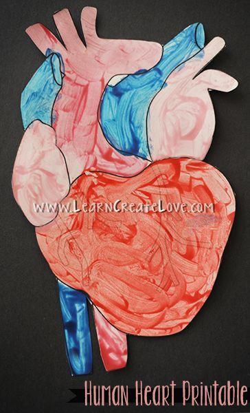 Human Heart Printable Craft Human Body Crafts Human Heart Art Human Body Activities