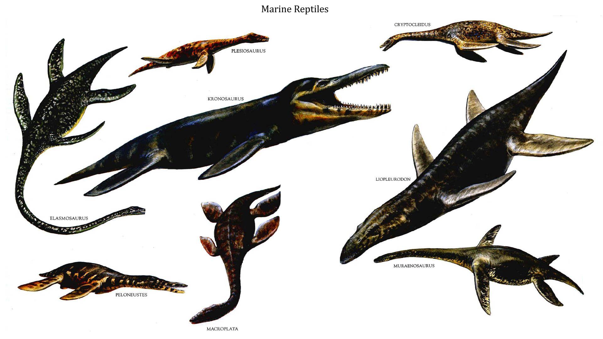Reptilian Marine Reptiles Prehistoric animals, Dinosaur