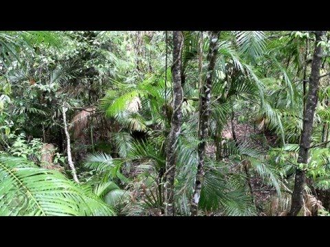 Jungle Sounds For Relaxation - 8 Hours Relaxing Rainforest Nature