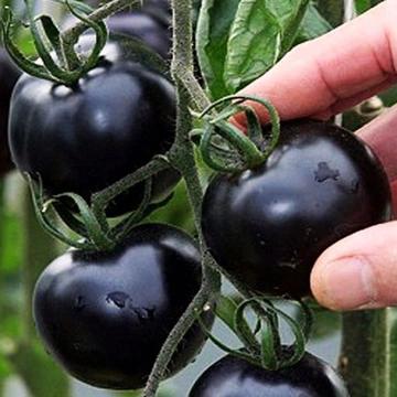 Ogrod Na Allegro Meble Narzedzia Oswietlenie Rosliny Nawozy Akcesoria Sklep Internetowy Eggplant Vegetables