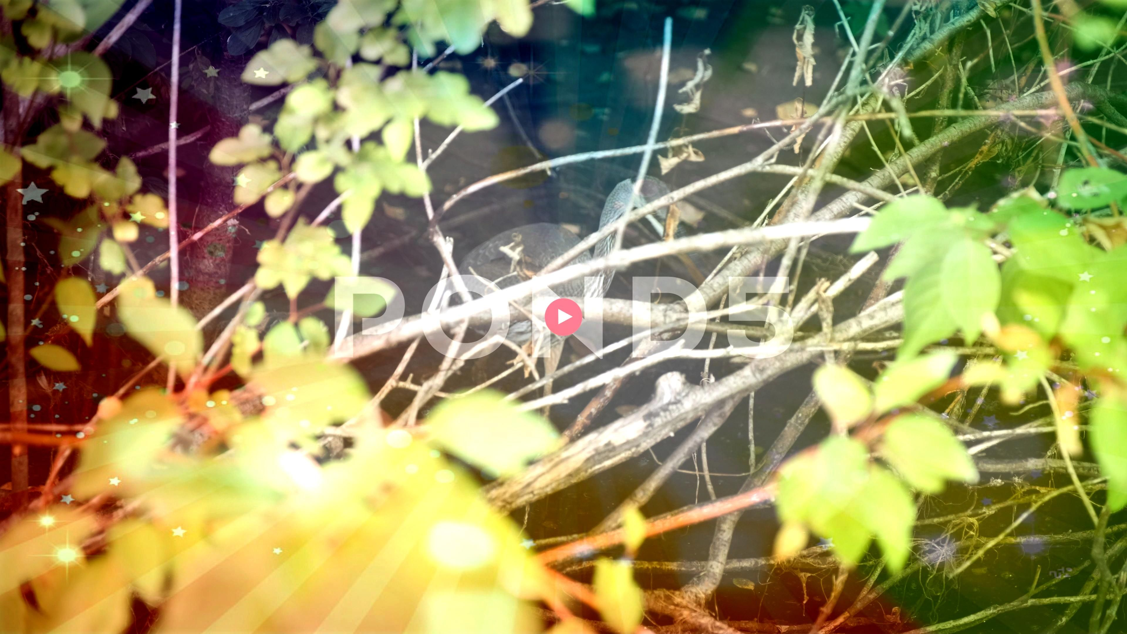 Eating in Marsh Animal Life Bird Watching in the Wilderness Stock Footage AnimalLifeMarshCraneCrane Eating in Marsh Animal Life Bird Watching in the Wilderness Stock Foot...