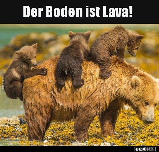 Der Boden Ist Lava Elaimia Animals Pinterest Funny Funny