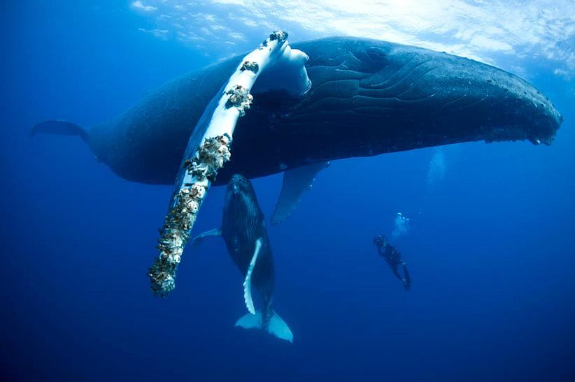 cetacean-nation | Whale, Sea mammal, Cetacean