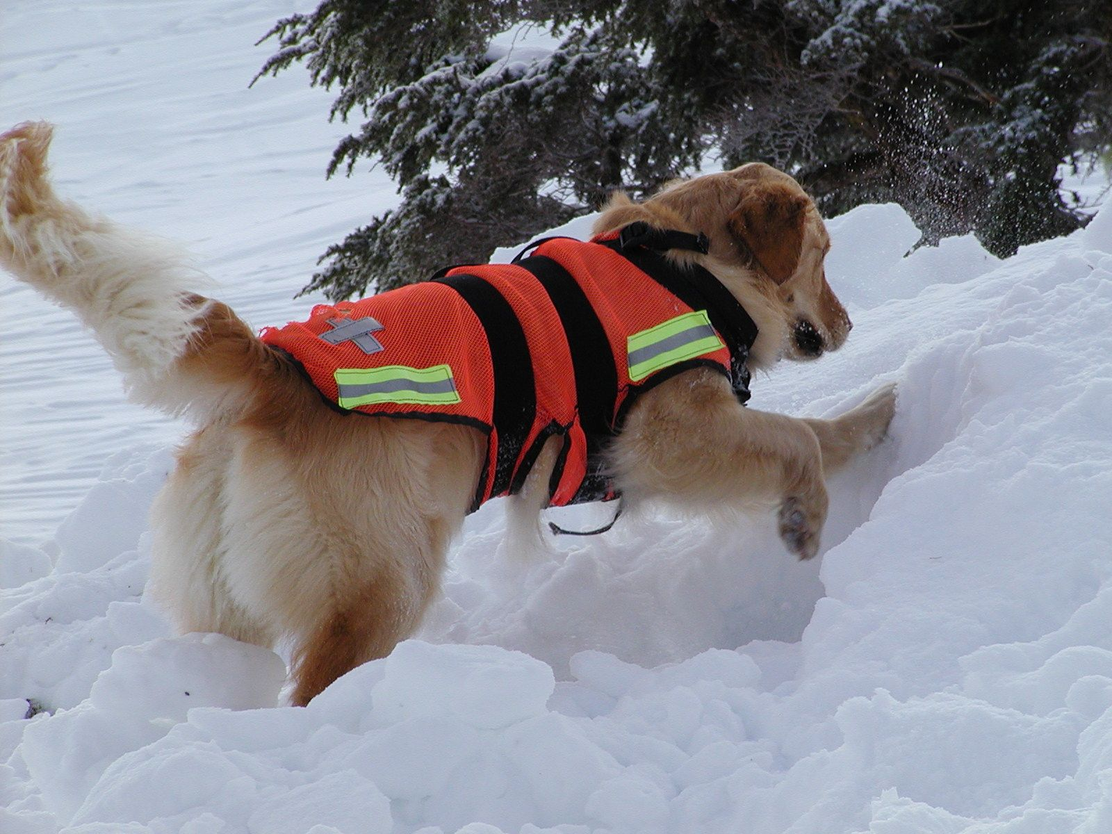 SEADOGS Home Page Search and rescue dogs, Military