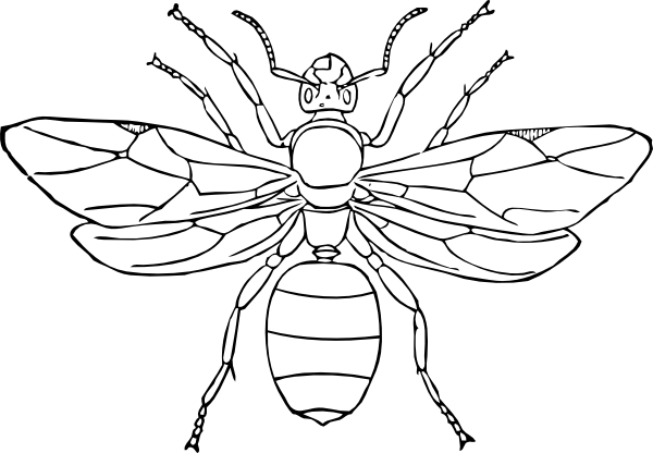 Parts Of An Insect Coloring Page Insect Coloring Pages Bug Coloring Pages Animal Coloring Pages