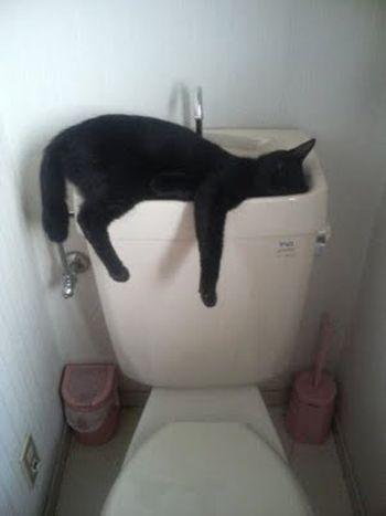 pinadonica conerly on pahahahaha  cat sleeping