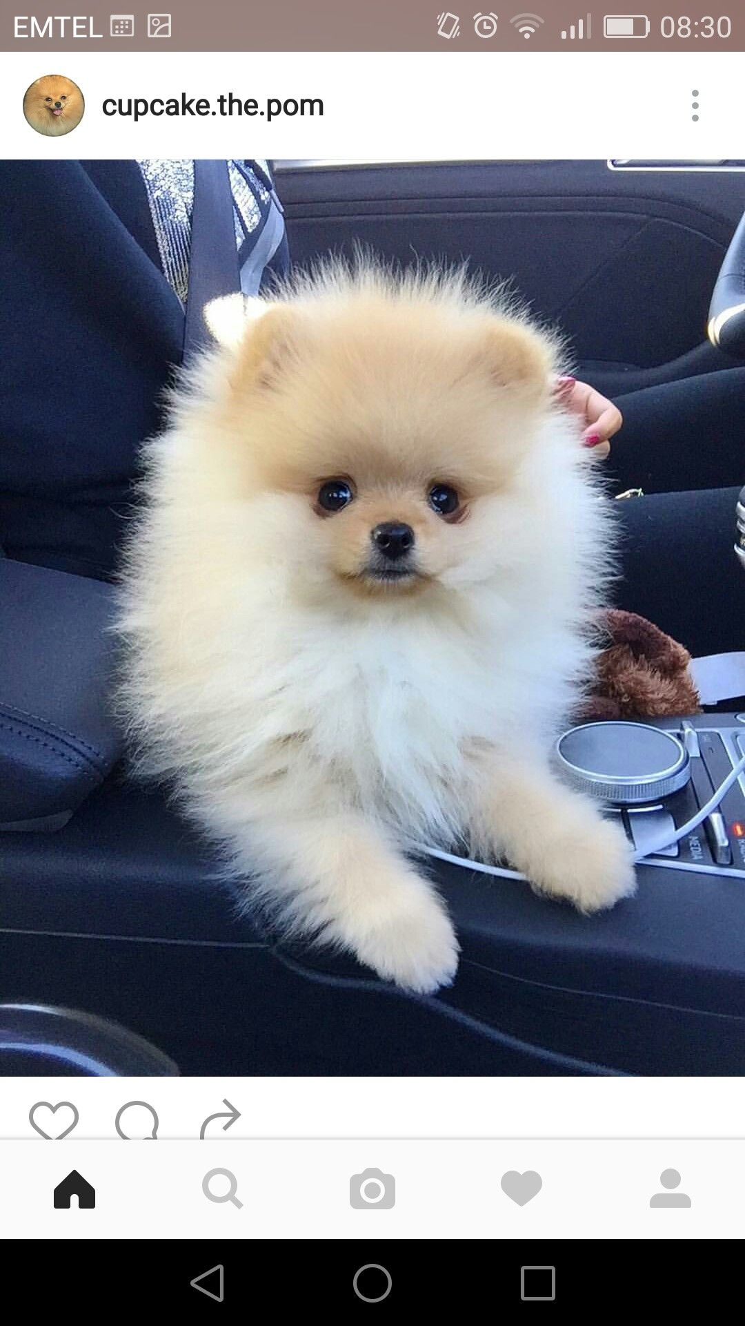 Pin By Karamazing On Cutest Pinterest Animals Dogs And Pomeranian