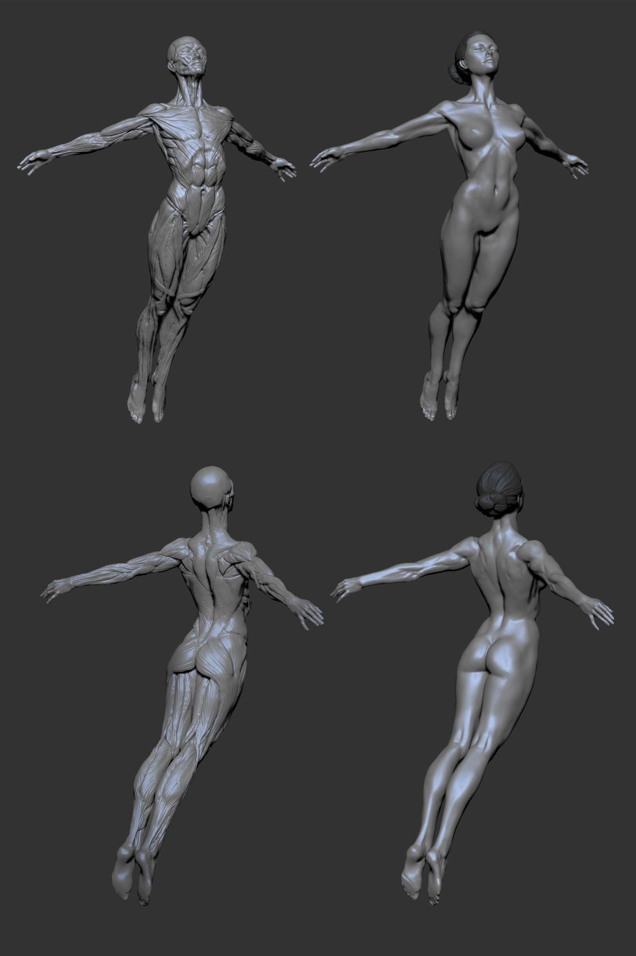 Female Anatomy By Mojette On Deviantart Anatomyfemale