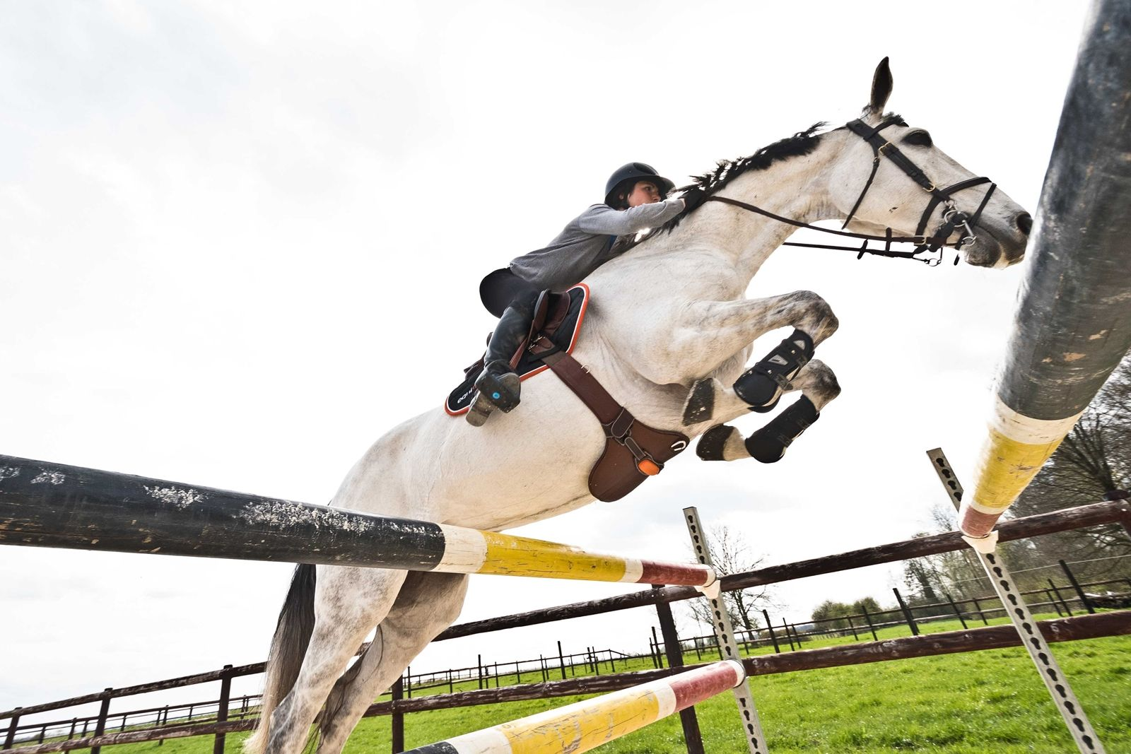 High Tech Equine Research With Images Horses Horse Training Equines