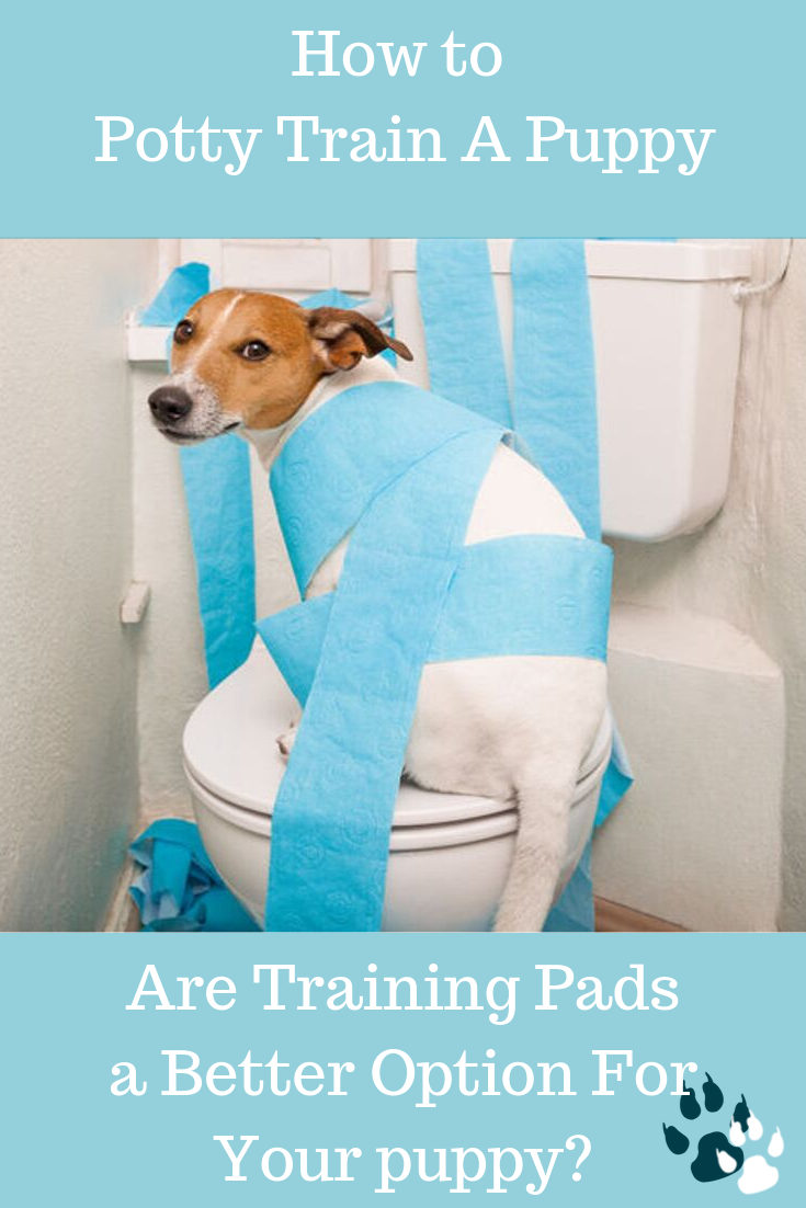 b21f6ca5d36bb6f2d8c851de46349ddf - How To Get My Puppy To Use Puppy Pads