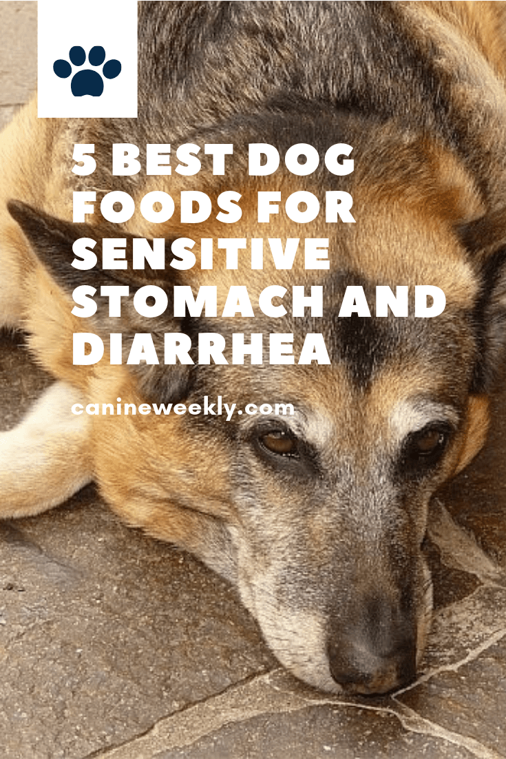 5 Best Dog Foods For Sensitive Stomach And Diarrhea 2020 Best Dog Food Dog Food Recipes Natural Dog Treats Recipes