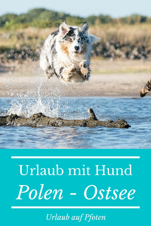 Ferienhauser Westpommern Mit Hund Urlaub Auf Pfoten In 2020 Ostsee Mit Hund Urlaub Mit Hund Urlaub
