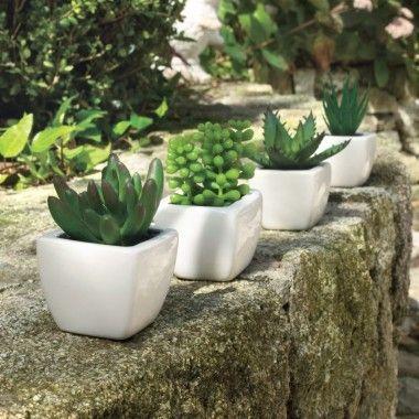 Succulente Plantes D Interieur Plantes Jardiland Plante