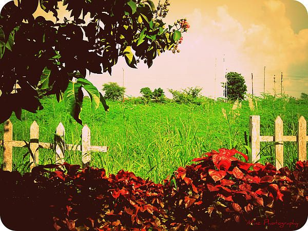 Grass and fence
