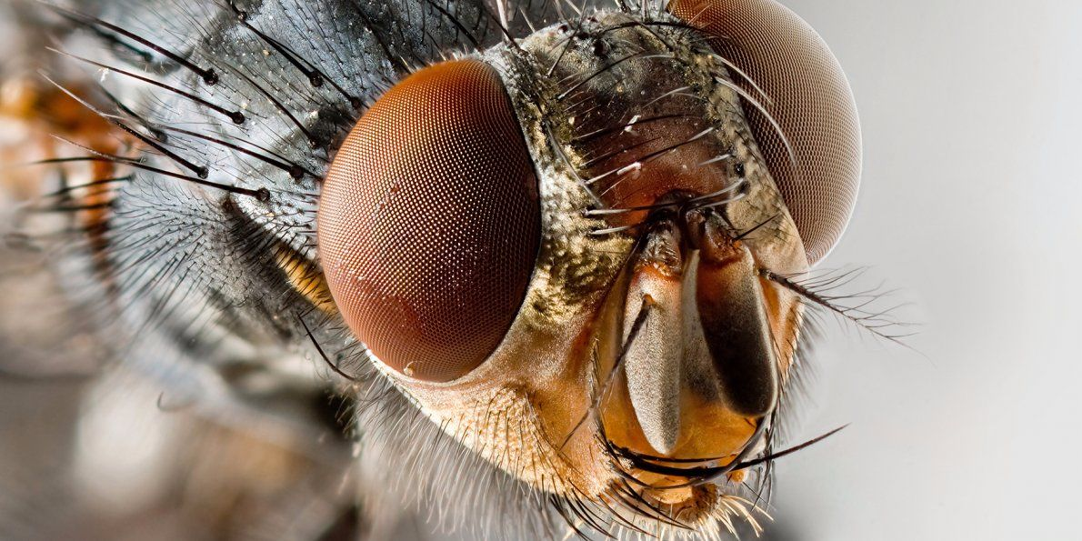 Bugs Survive The Winter Through A Trick Straight Out Of Science Fiction Insects Spirit Animal Totem Fly Infestation