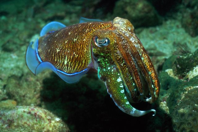 Mollusk Facts: Habitat, Behavior, Diet   Molluscs ...