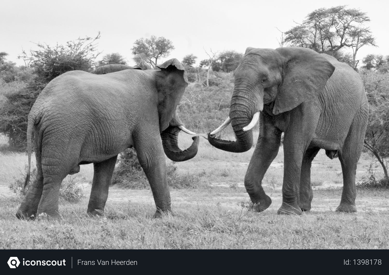 Free Elephant Photo download in PNG & JPG format | Elephants photos,  Elephant, Photo