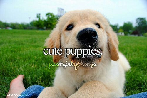 Pin By Ruth Ann Gannon On Just Girly Things Smiling Dogs Cute