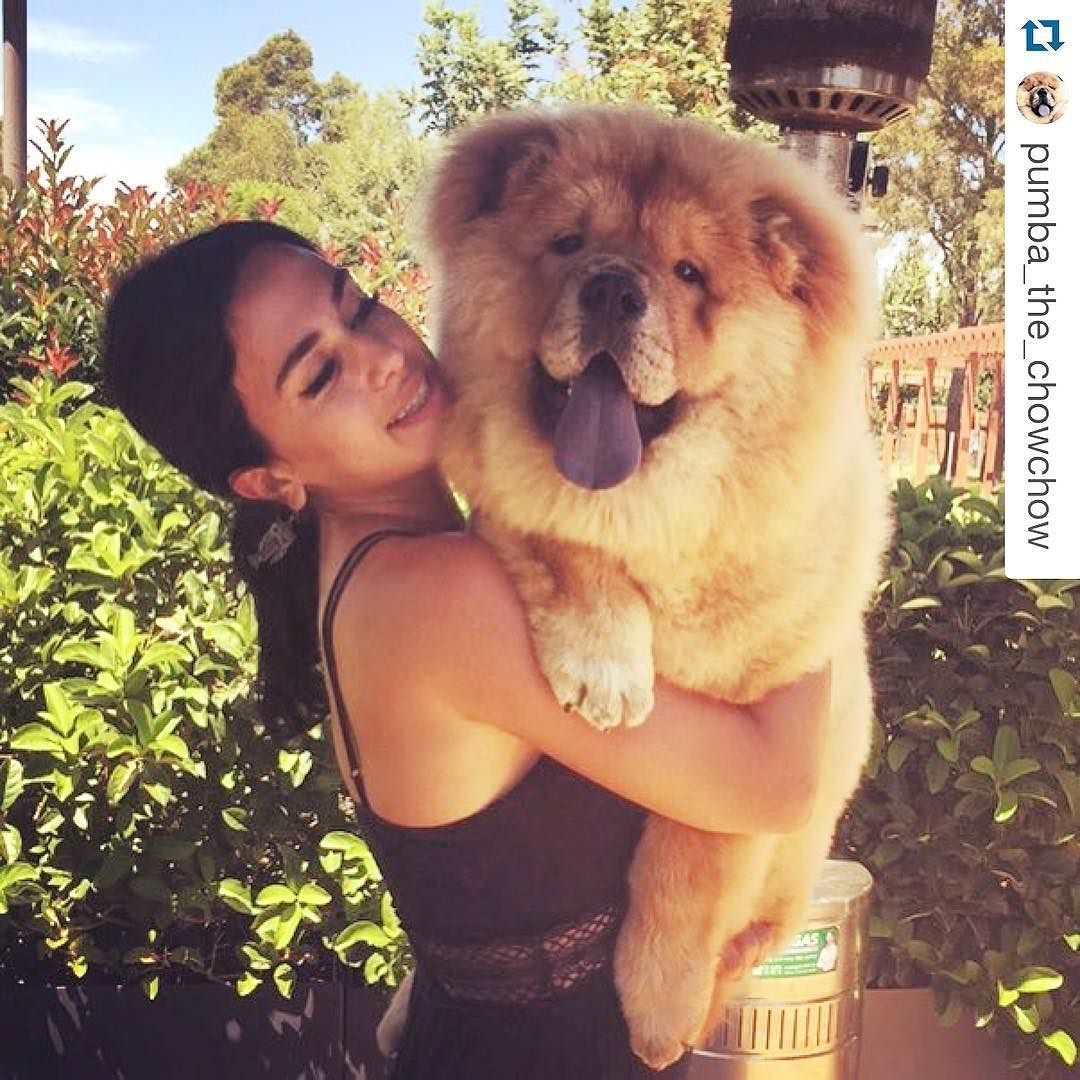 Working On A Special Project With My Love Pumba Myfatty Chowchow