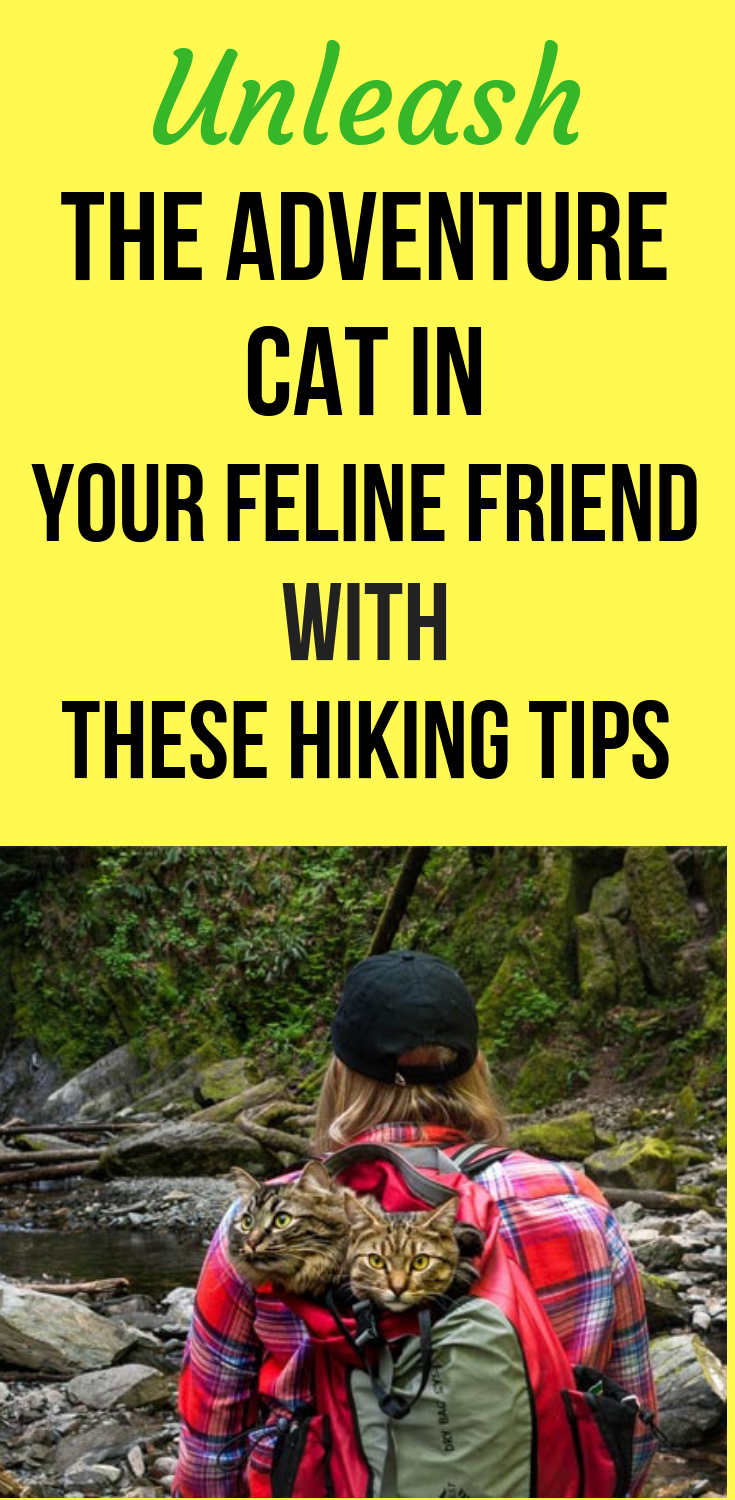 Unleash The Adventure Cat In Your Feline Friend With These