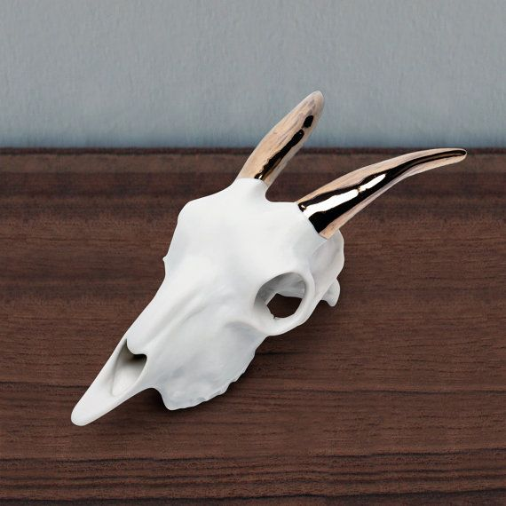Porcelain goat skull w. 14.k gold lustered horns. Table or wall hung piece. Measures 10.5 x 5.5 x 4