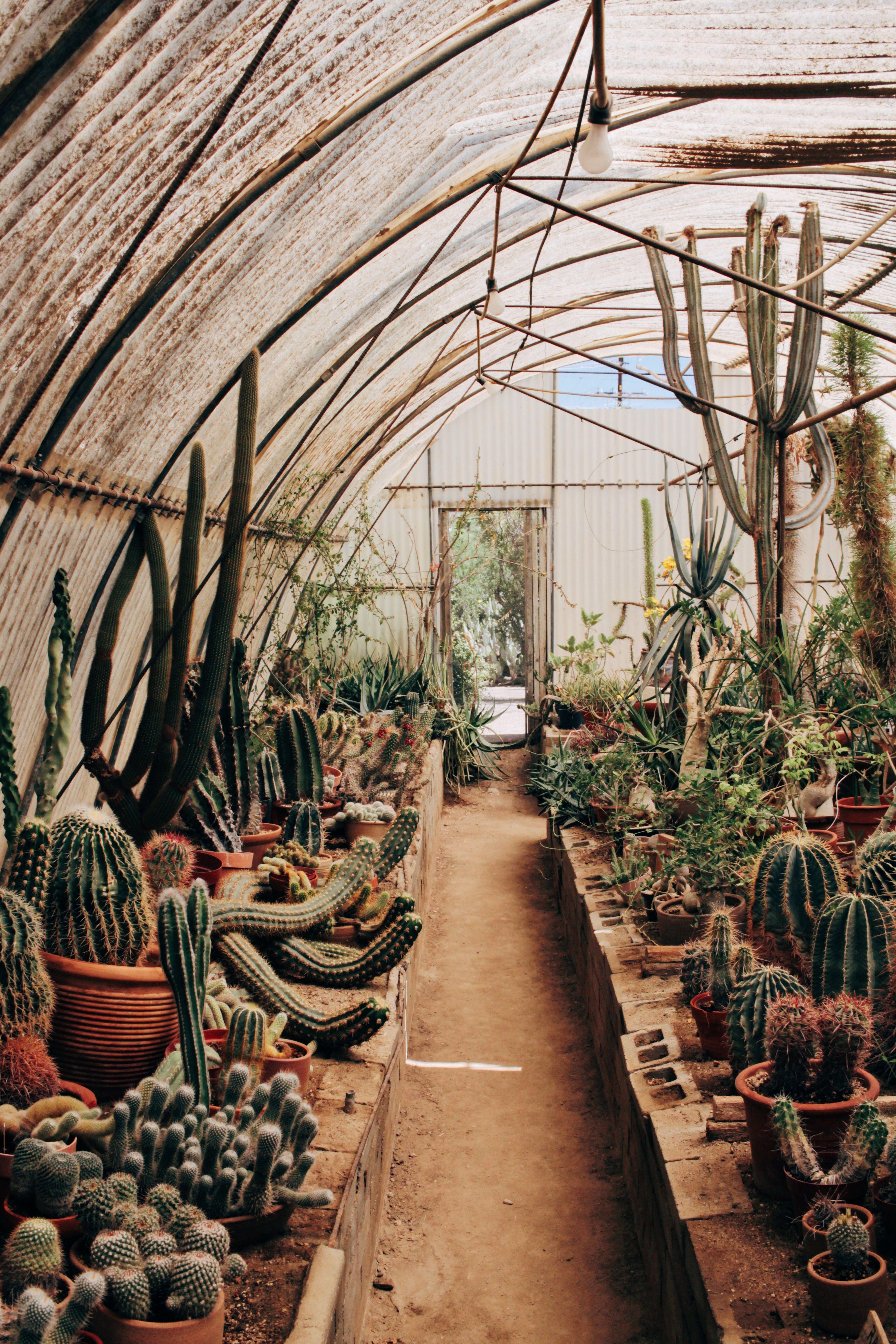 Moorten Botanical Garden, Palm Springs Botanical gardens