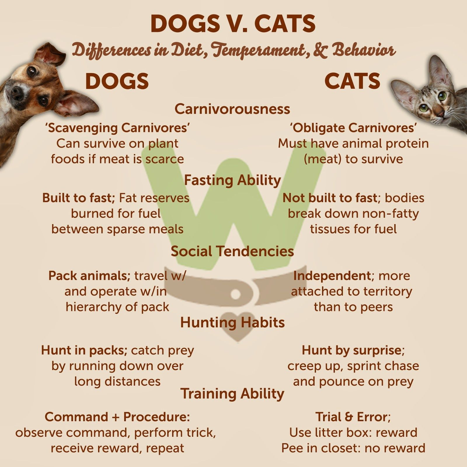 Veterinary Medicine Differences Between Cat Dog Food Canine Health Food Animals Feline Health